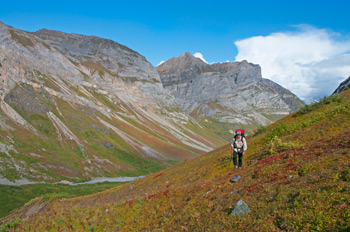 A backpacker hikes up the valley of Hidden Creek, in the Wrangell Mountains. Fall colors glow on the tundra. Wrangell - St. Elias National Park and Preserve, Alaska.