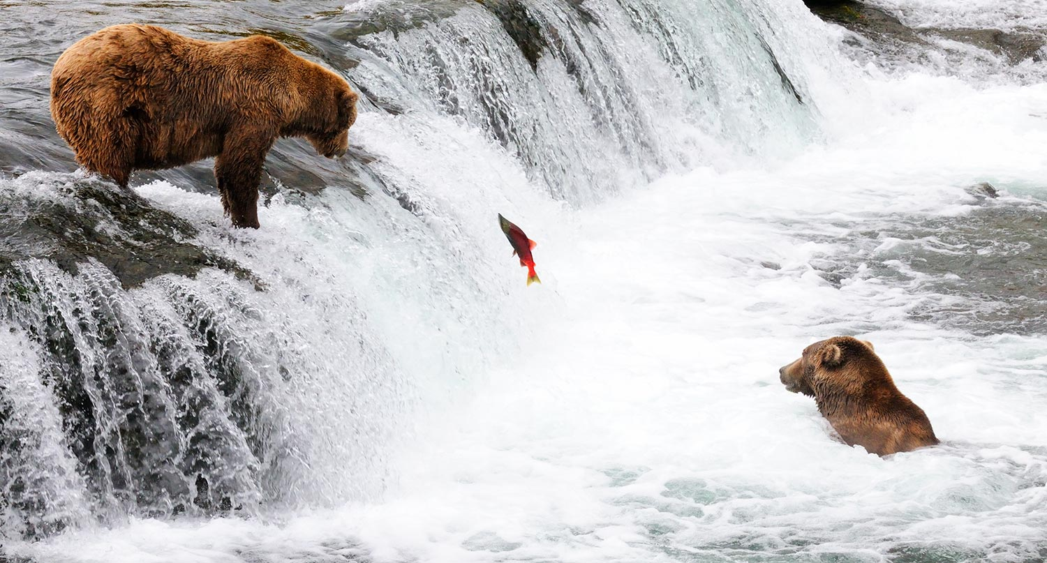 Katmai National Park Pebble Mine article bears fishing brooks Falls, Alaska.