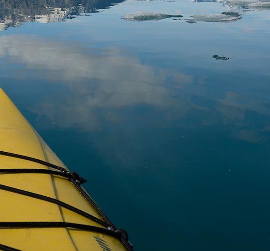 Alaska sea kayaking tours Icy Bay.