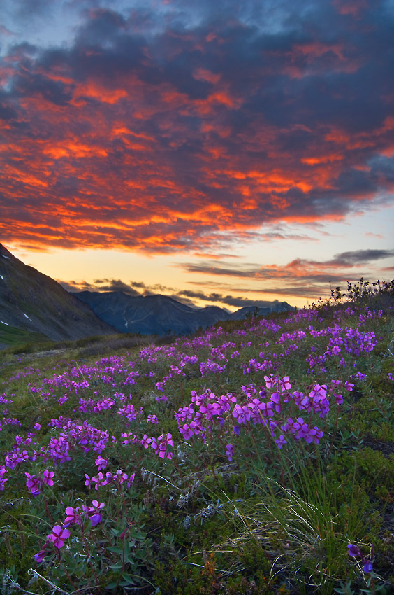 Sunset over Chugach mountains on Seven Pass Route hiking trip, Wrangell - St. Elias National Park, Alaska.